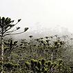 Three new species of Krogia (Ramalinaceae, ...