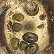 Discovery of Cytospora species associated ...