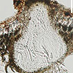 Lignicolous freshwater ascomycota from ...
