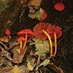 Studies of Neotropical tree pathogens ...