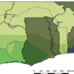 Soil fungal communities of ectomycorrhizal ...