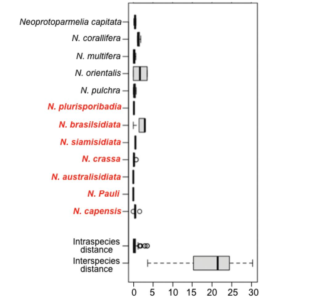 Neoprotoparmelia gen  nov  and Maronina (Lecanorales